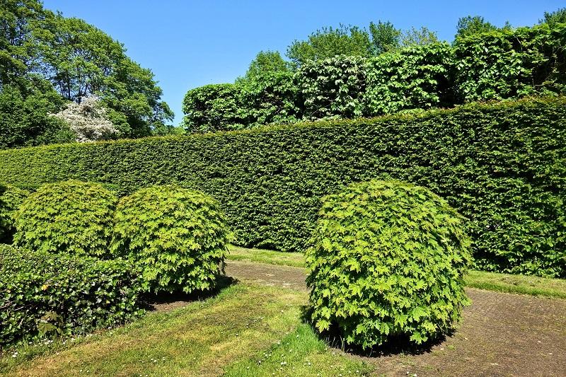 マンション敷地内の植栽も管理組合による管理の対象